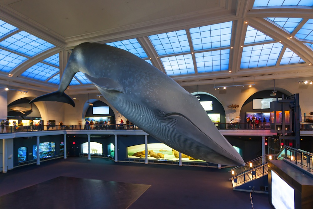 Museo De Historia Natural De Nueva York Visitas Horarios Precios Y Dirección 101viajes
