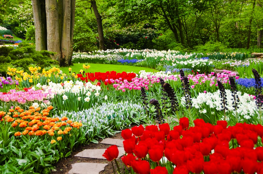 Jardines de keukenhof parque de tulipanes cerca de for Jardin keukenhof