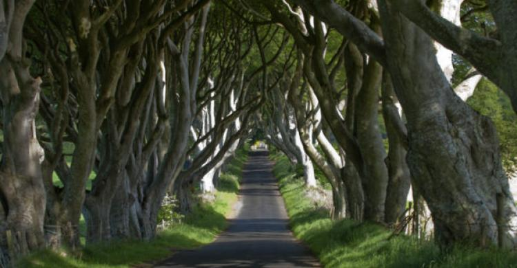 Avenida Dark Hedges