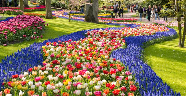 Tour a los jardines de keukenhof y campos de tulipanes for Jardin keukenhof
