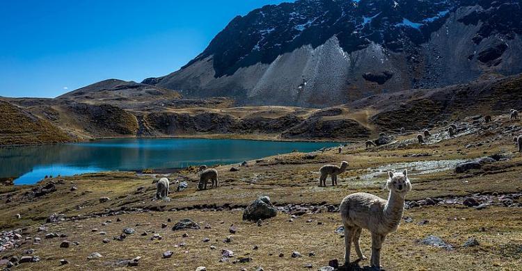 Trekking por la Montaña Arcoíris, desde Cusco - 101viajes