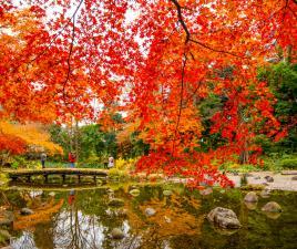 Qu ver en tokio y qu hacer for Jardin koishikawa korakuen