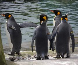 pinguinos zoo